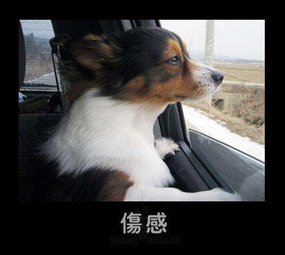 引用 一些可爱的动物表情~~超可爱 - 好色之啚 - 都市农民de博客