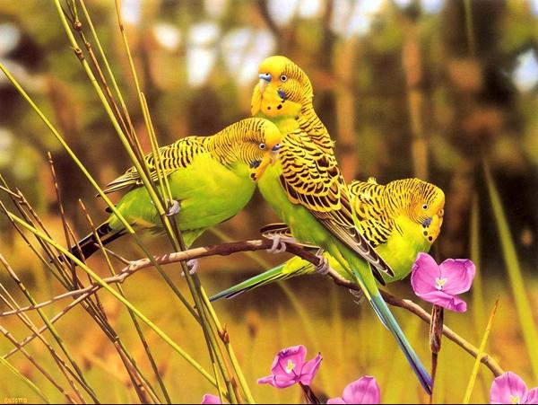 可爱的动物  - 锦泉 - 锦泉