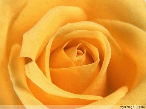 音画欣赏—玫瑰 - 蝉翼云朵 - 蝉翼云朵