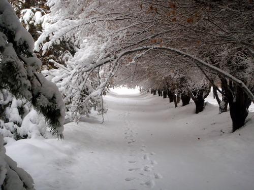 雪中石河子大学 - 贺卫方 - 贺卫方的博客