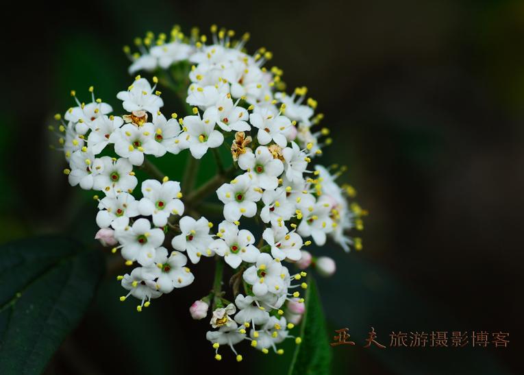 (原摄)春之曲 系列三 - 高山长风 - 亚夫旅游摄影博客