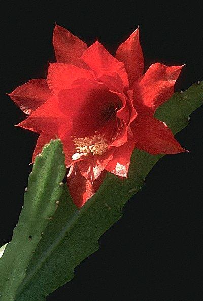 七种罕见奇花  - daigaole101 - 我的博客