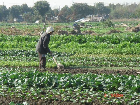 采访农民伯伯图片