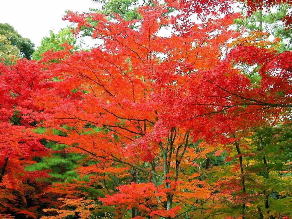 红叶尽染千山艳 - 靓剑 - 靓剑 的博客