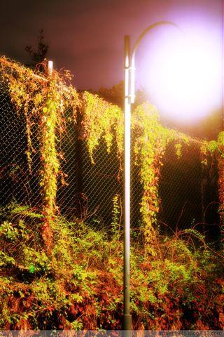 生如夏花,死若秋叶(原创摄影) - 夜倾城 - 永不褪色的只有黑色