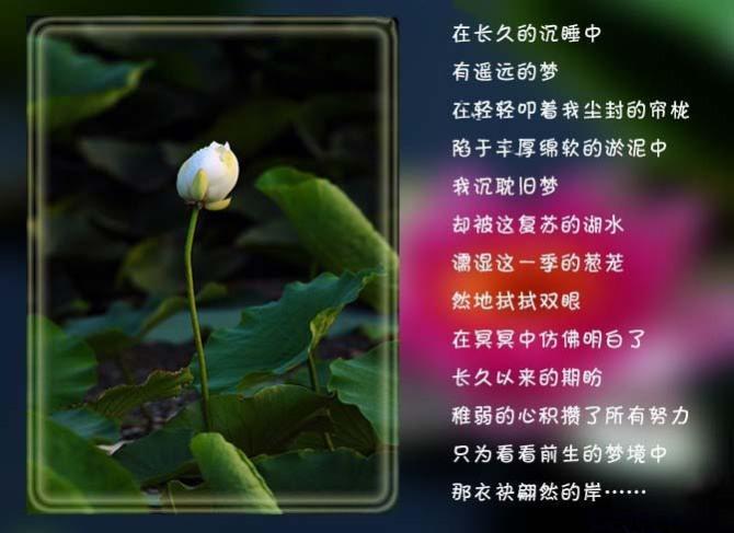 引用 今生还是错过了你 - gaoyuanhong1 - 高原红的博客