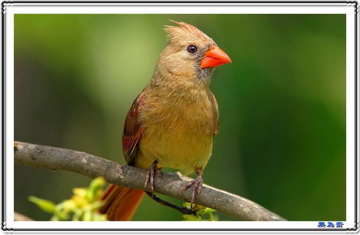 百鸟争鸣!【高清美图+音效】 - 红苹果 - 红苹果的博客