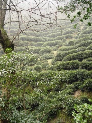 龙井村 - 于市隐 - 禅茶一味