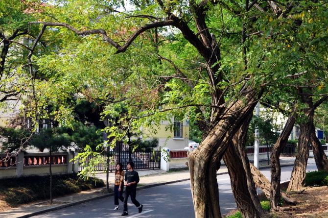 青岛十月:从八大关到五四广场 之一(路边)【信天翁】 - @巢 - 爱-情-鸟@巢