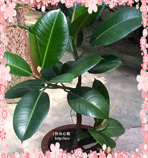 18种植物放入室内的功效 - 浓郁咖啡 - 浓郁咖啡的博客