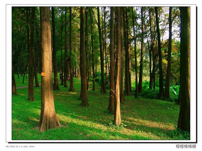 【原创】_广州随拍 - 柠檬棒棒糖 - 柠檬棒棒糖的美丽田园