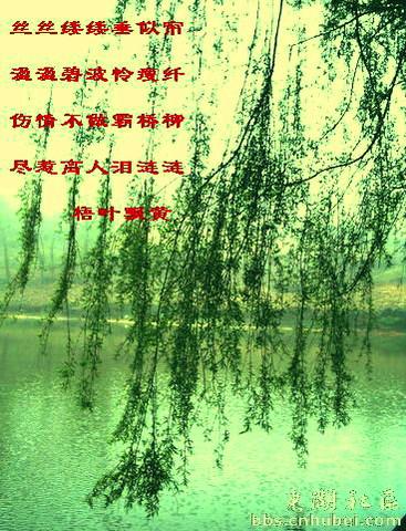 [原创]春风杨柳万千条 - 梧叶飘黄 - 梧叶飘黄的博客