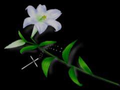 黑色背景鲜花插画 - 芳芷香惠 - 芳芷香蕙欢迎你
