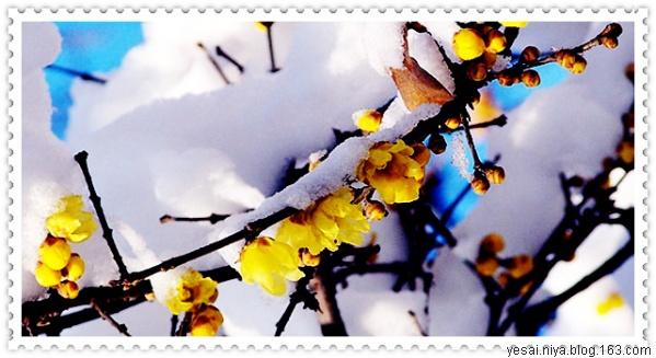 读 《冬》答盈盈 - 无心居士 - 无心插柳