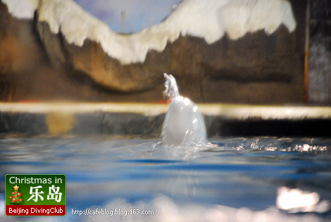 圣诞周末乐岛潜水之旅(第一部分) [补充新图了!] - cafeblog - 许宁的博客 cafe blog