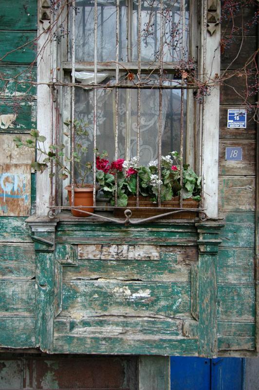 绽开在窗口的鲜花 - 蔡骏 - 蔡骏的博客