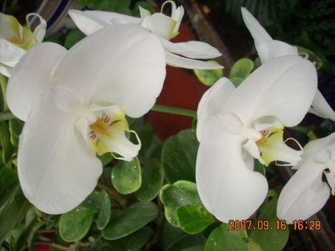 我的摄影作品 各种花卉 原创图片