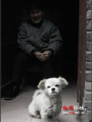 感动中国十大动物之陪伴老人18年的老狗(图)