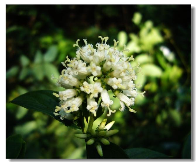 重阳节色彩之旅 - julinju2008 - 邻居千色自由行