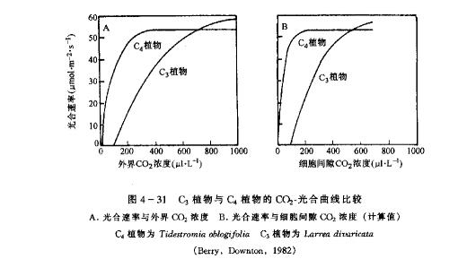 【引用】关于C4植物的几个问题 - 蒋迎仙 - 蒋迎仙的生物课堂内外