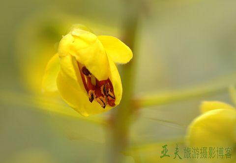 (原摄)四川烟霞湖小景 - 高山长风 - 亚夫旅游摄影博客