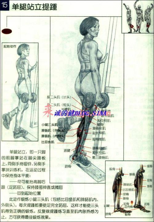 腿部肌肉训练 - 王春盛 - 无兄弟不健美