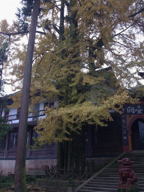 震后半年的都江堰和青城山 - 朱达志 - 朱达志的博客
