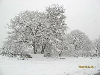 [原创]   又是一年飘雪时