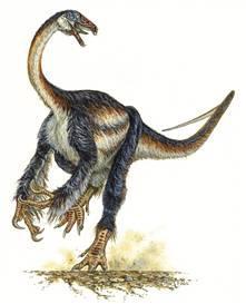 玫瑰马普龙:最大的食肉恐龙