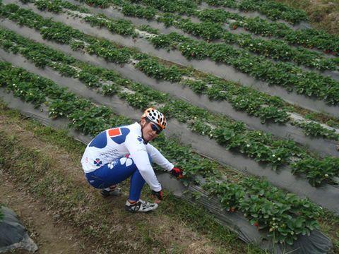 逛仰大,摘草莓 2008.12.13 - Ocean Liu - Ocean Liu 的博客
