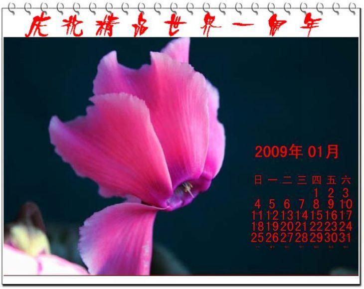 姹紫嫣红【大漠摄影】 - 大漠独行 - 大漠深处camel的博客