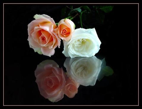 (原创)如花的思绪 - 真水无香  - 香格里拉 花开的地方