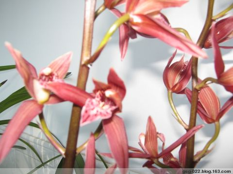 我种的兰花(原创) - gsg-022 - gsg-022的博客