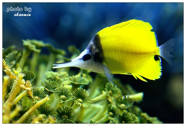 海底世界 - 珍惜缘分 - 珍惜缘分的家园