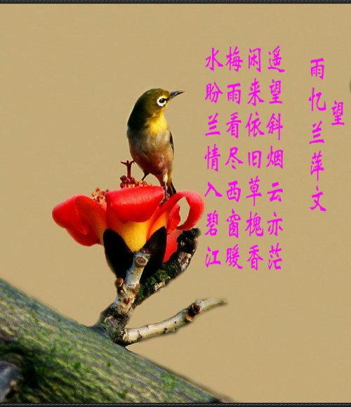 雨忆兰萍诗词集锦______望 - 雨忆兰萍 - 网易雨忆兰萍的博客