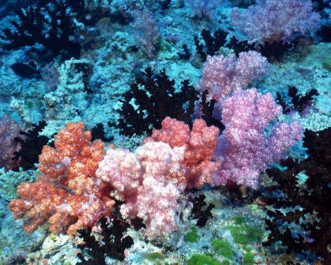 美丽的海底珊瑚 - 老鬼 - 天生博客 老鬼 欢迎光临