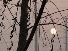 2008年2月12日 - 大白杨 - 大白杨