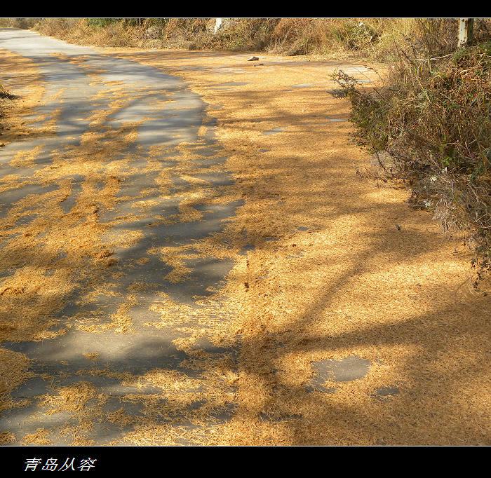 09年11月1日走寨上-黑风口-北九水-太和观 - qdgcq - 青岛从容