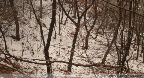 雪后山林 - ljrlj626 - 快乐冰凌