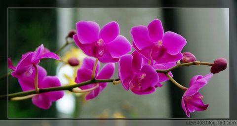 诗情叙春话友谊19首(疏勒河的红柳原创) - 疏勒河的红柳 - 疏勒河的红柳