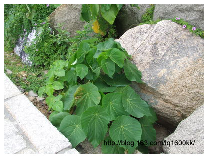 东澳岛之行(1)——海岛植物 - lq - LQ的博客