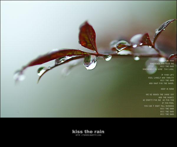 [原创]陪我在雨中 - 涛哥 - .