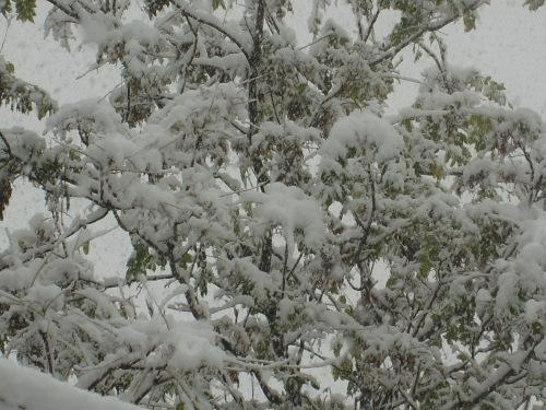 2009年的第一场雪 - 风水专家 - 风水专家的博客