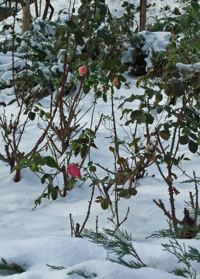 雪后初晴山色清--游北京北宫森林公园 - 侠义客 - 伊大成 的博客