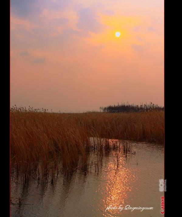 太湖湿地  [原创] - 清茗轩 - 清茗轩   摄影博客