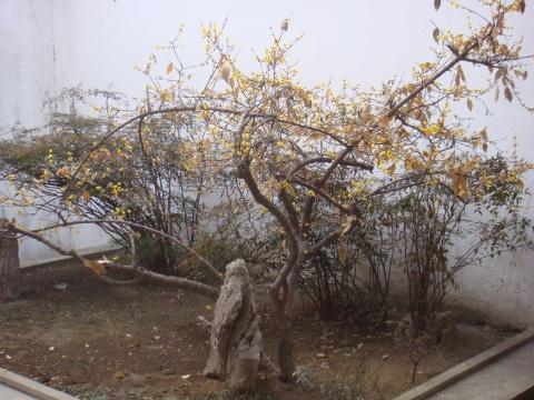 正月走扬州之七:大明寺与佛教园林 - 赵小波 - 赵小波的博客