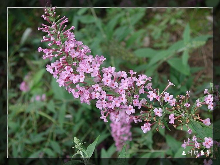 植物精美图谱 - 逍遥客 - 逍遥客