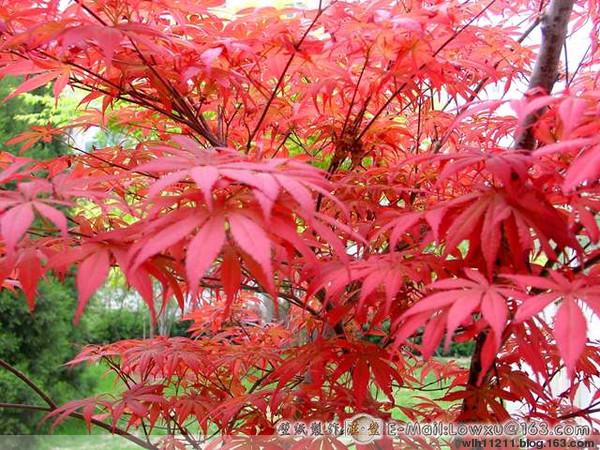2009年4月28日 - 红枫 - 红枫的博客