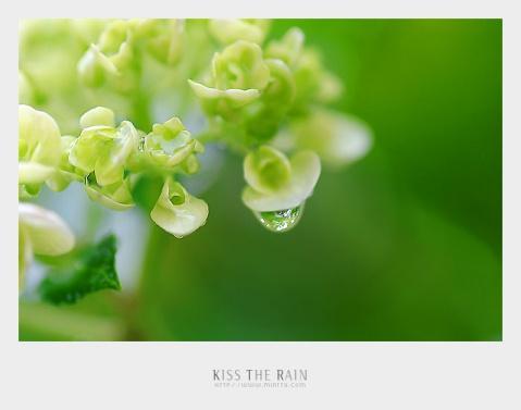 夏天的味道(组诗)童慧美曦 - 落落 - 三(2) 我们的阳光小屋