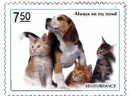 自己动手制作的邮票 - 烟雨蒙蒙 - 烟雨蒙蒙的博客